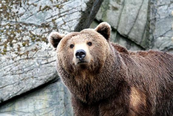 los ojos del oso