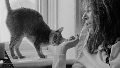 Patti-Smith y gato