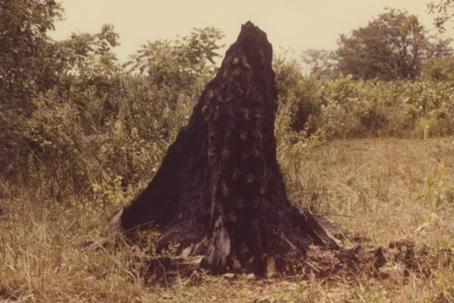 Ana Mendieta - Silueta Series (Tree of Life Series), 1978